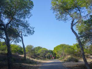 Parque alfonso xIII Guardamar