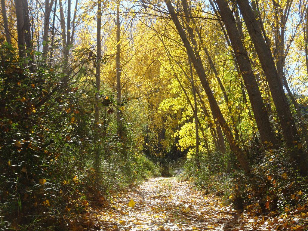 planes con niños alicante beniarres otoño