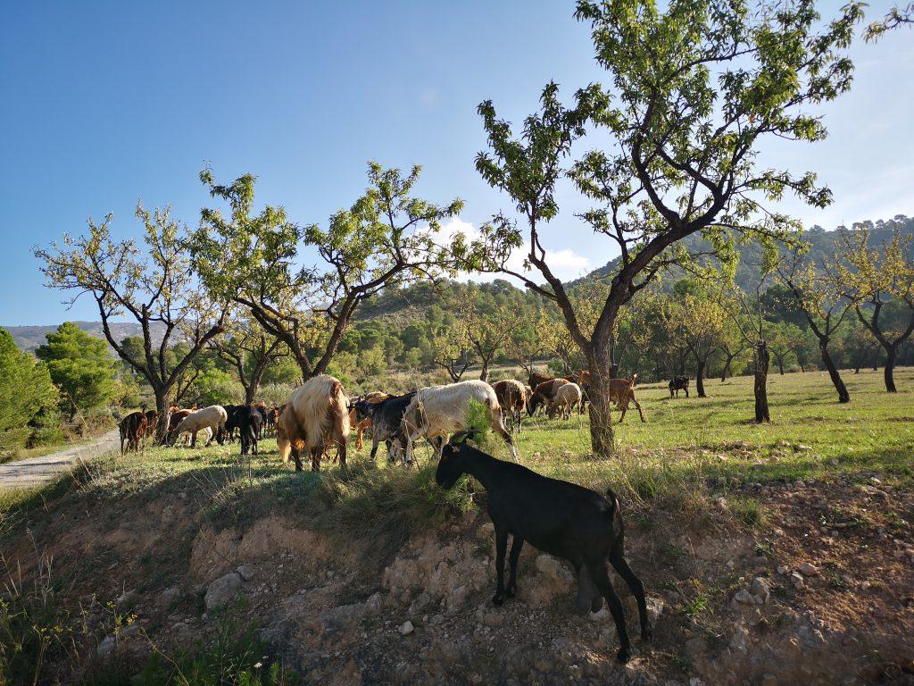 Quesería del Valle de Tibi