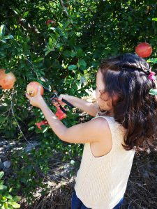Alicante con niños planes divertidos