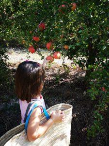 Recolectar frutas con niños alicante